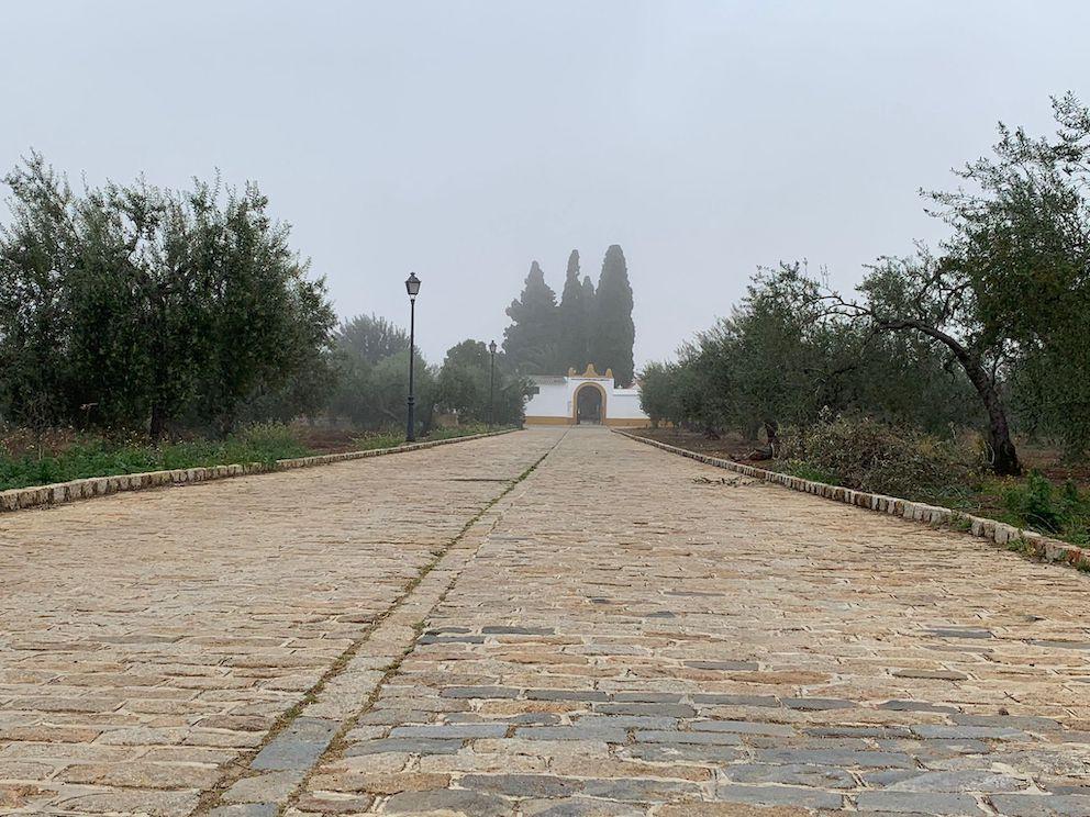 AionSur: Noticias de Sevilla, sus Comarcas y Andalucía cementerio-gerena Piden que la calle del cementerio de Gerena lleve el nombre de 'Las 17 Rosas de Guillena' Gerena