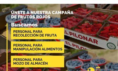 AionSur: Noticias de Sevilla, sus Comarcas y Andalucía 167995778_4013453558718015_4373702900051179569_n-400x240 Oferta de empleo en Bonares para empresa de frutos rojos Economía oferta de empleo empleo Huelva empleo Bonares noticias Bonares información Bonares actualidad Bonares