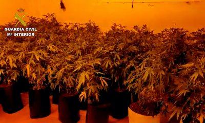 AionSur: Noticias de Sevilla, sus Comarcas y Andalucía marihuana-utrera-400x240 La Guardia Civil de Utrera incauta 444 plantas de marihuana en una vivienda ocupada Narcotráfico destacado