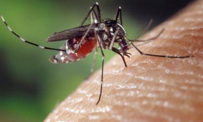 AionSur: Noticias de Sevilla, sus Comarcas y Andalucía mosquito-400x240 San Juan de Aznalfarache declara la guerra al mosquito del virus del Nilo Salud