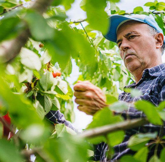 AionSur: Noticias de Sevilla, sus Comarcas y Andalucía agricultura-560x550 Carmona, sede de un proyecto mundial de Bayer de agricultura sostenible Agricultura destacado