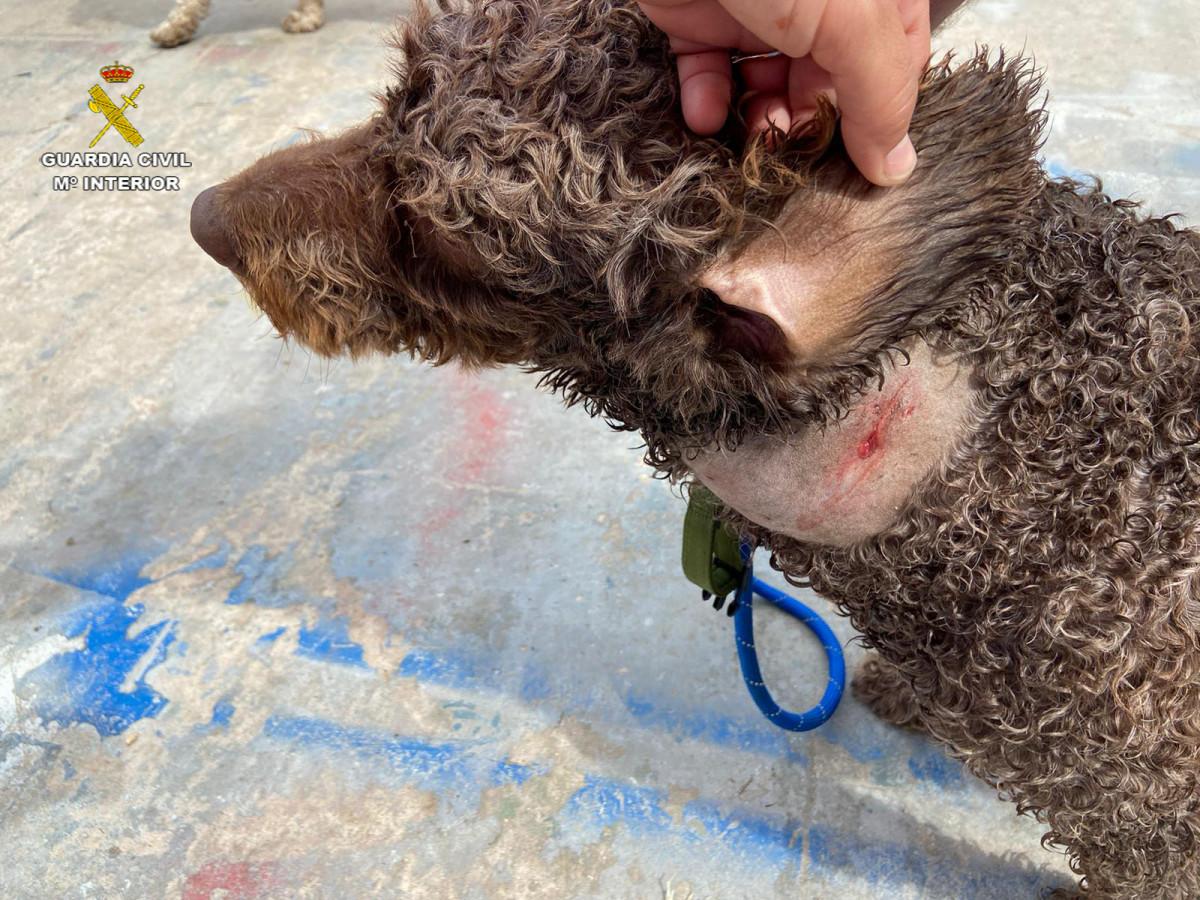 Investigan a un vecino de El Cuervo por el robo de 8 perros de raza en Arahal