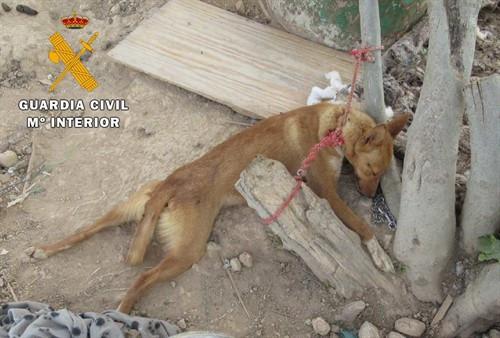 """Una vecina de Salteras condenada por dejar morir """"de hambre y sed"""" a 13 perros"""