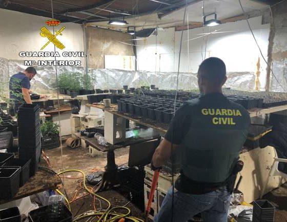 Intervienen más de 3.000 plantas de marihuana en una parcela de Carmona